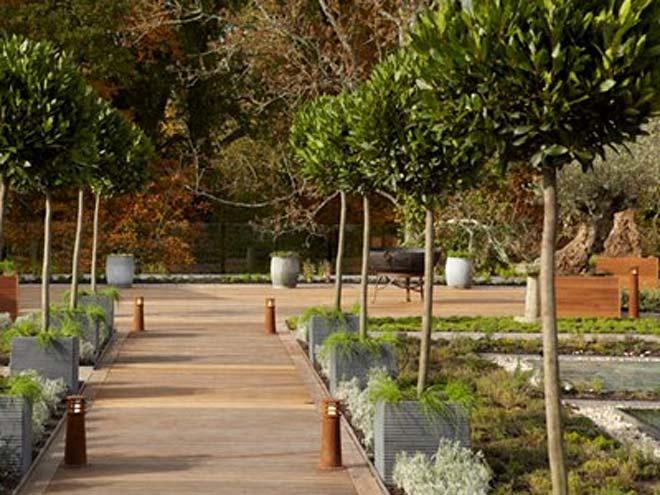 Limewood Bay Trees